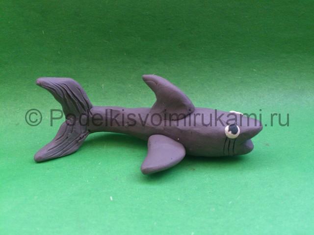 Акула из пластилина. Шаг №9.