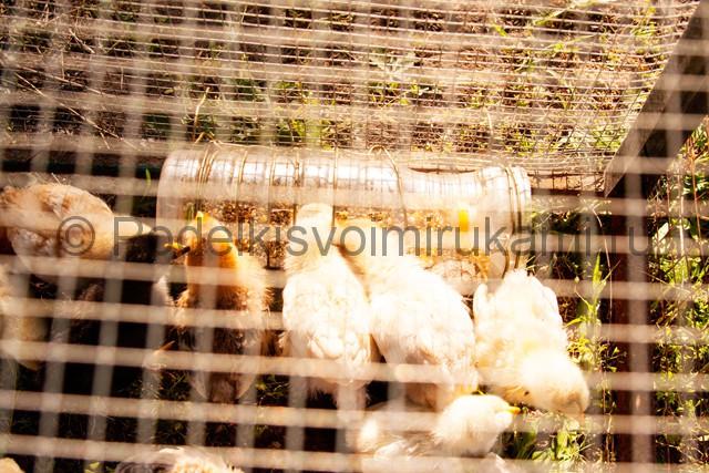 Кормушка для цыплят из пластиковой бутылки. Фото 1.