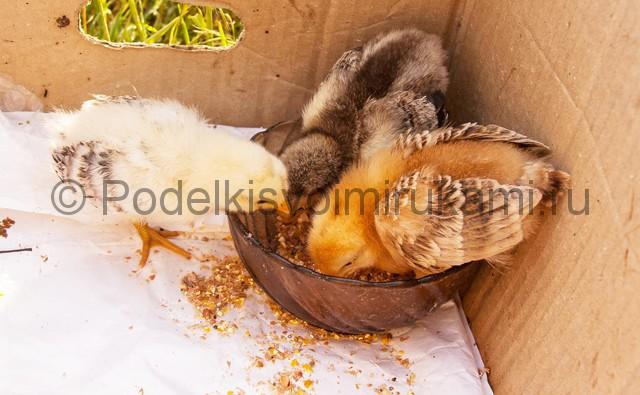 Кормушка для цыплят из пластиковой бутылки. Фото 2.