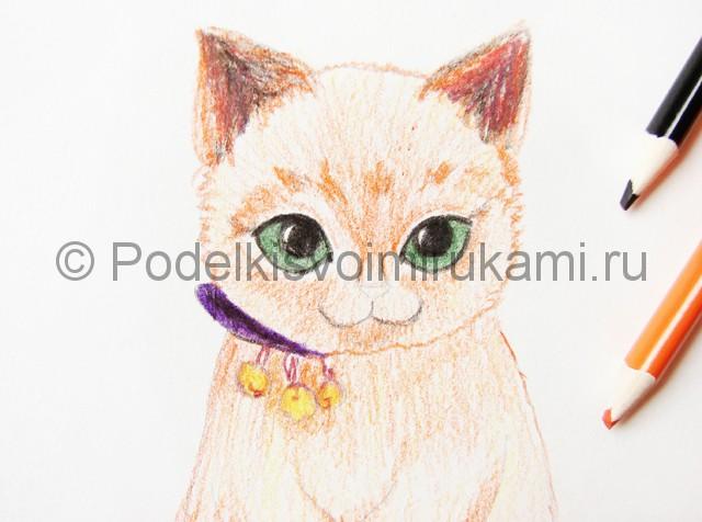 Рисуем кошку цветными карандашами - фото 13.