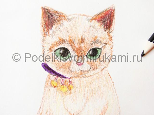 Рисуем кошку цветными карандашами - фото 14.