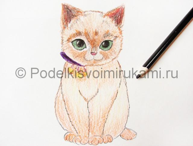 Рисуем кошку цветными карандашами - фото 15.
