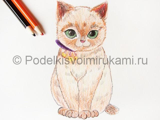 Рисуем кошку цветными карандашами - фото 16.