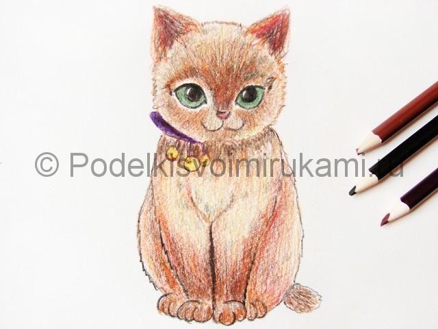 Рисуем кошку цветными карандашами - фото 17.