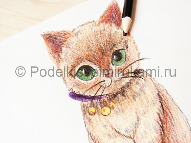 Рисуем кошку цветными карандашами - фото 21.