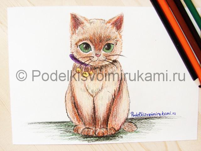 Рисуем кошку цветными карандашами - фото 22.