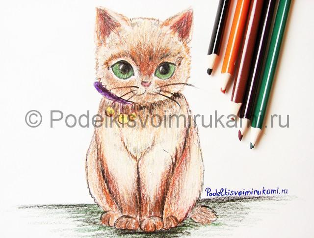 Рисуем кошку цветными карандашами - фото 23.
