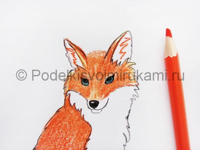 Рисуем лису цветными карандашами - фото 17.