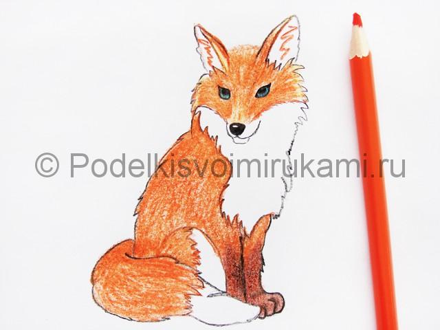 Рисуем лису цветными карандашами - фото 18.
