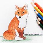 Рисунок лисы цветными карандашами.