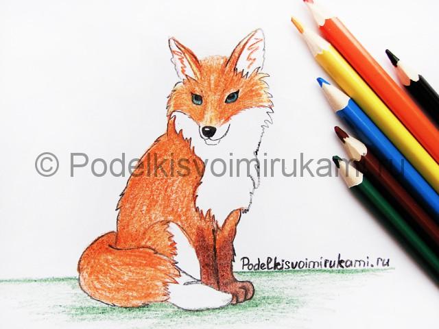 Рисуем лису цветными карандашами - фото 22.