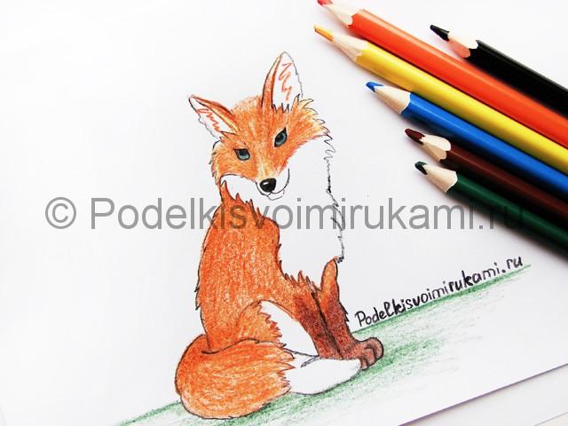 Рисуем лису цветными карандашами - фото 23.