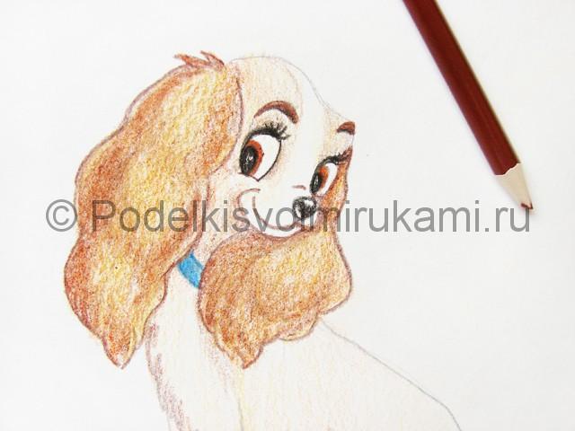 Рисуем собаку цветными карандашами - фото 19.