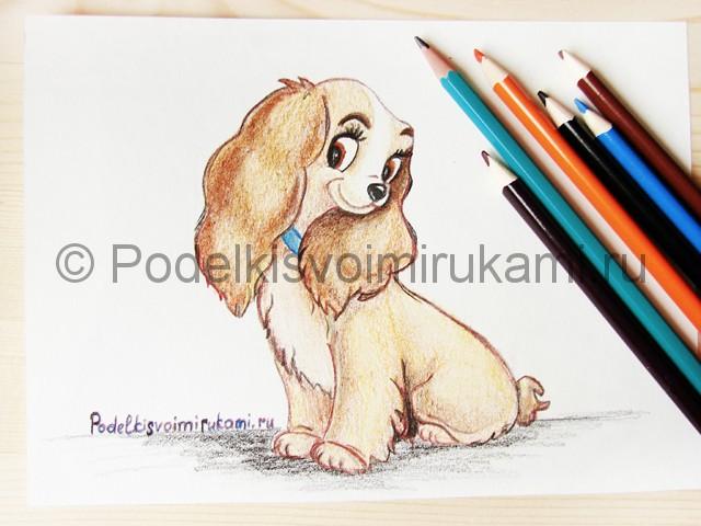Рисуем собаку цветными карандашами - фото 30.