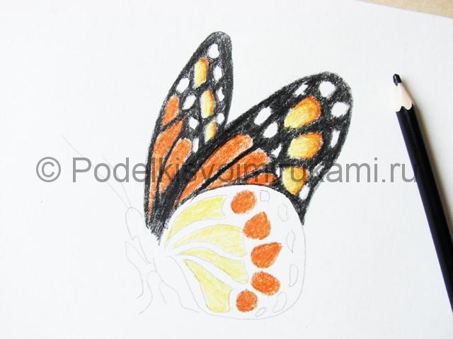 Рисуем бабочку цветными карандашами - фото 15.