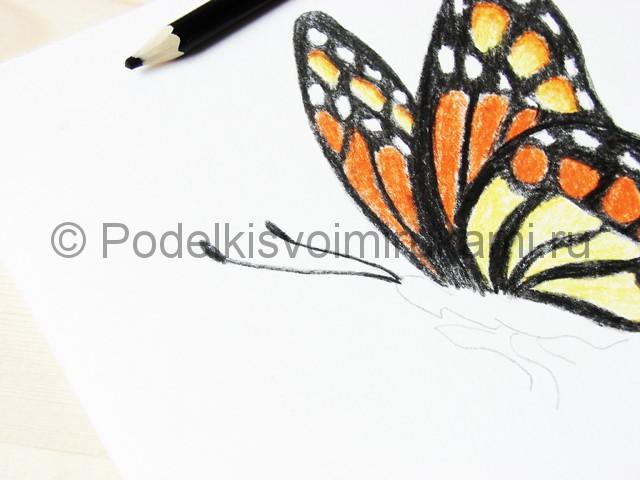 Рисуем бабочку цветными карандашами - фото 17.