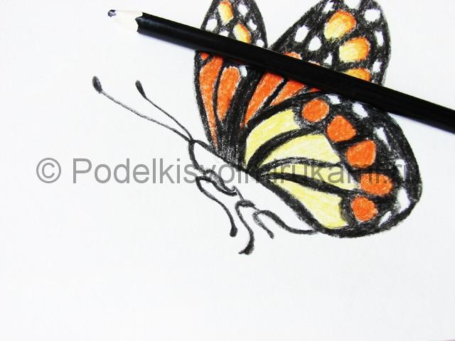 Рисуем бабочку цветными карандашами - фото 18.