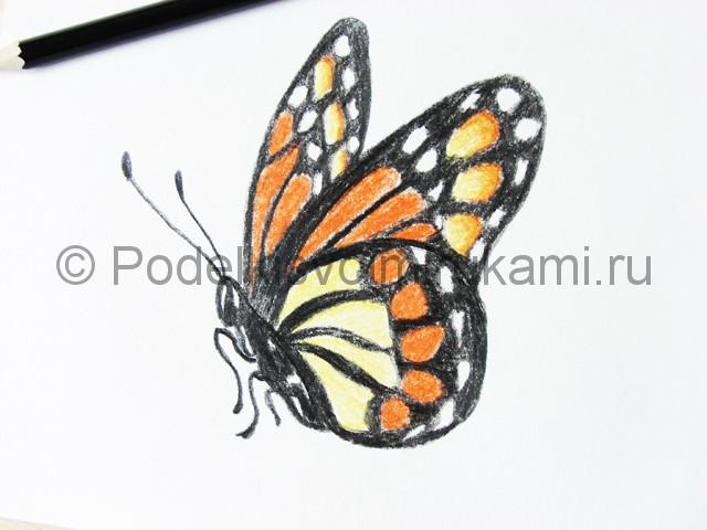 Рисуем бабочку цветными карандашами - фото 19.