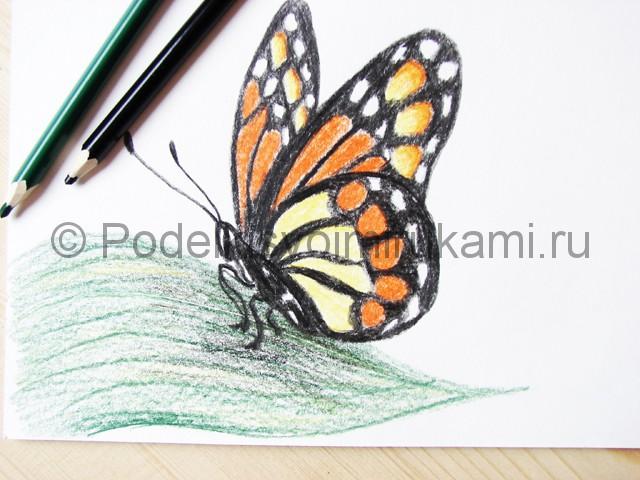 Рисуем бабочку цветными карандашами - фото 22.