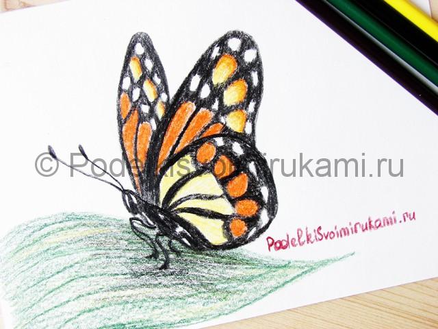 Рисуем бабочку цветными карандашами - фото 23.