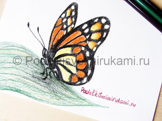 Рисуем бабочку цветными карандашами - фото 24.