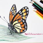 Рисунок бабочки цветными карандашами.