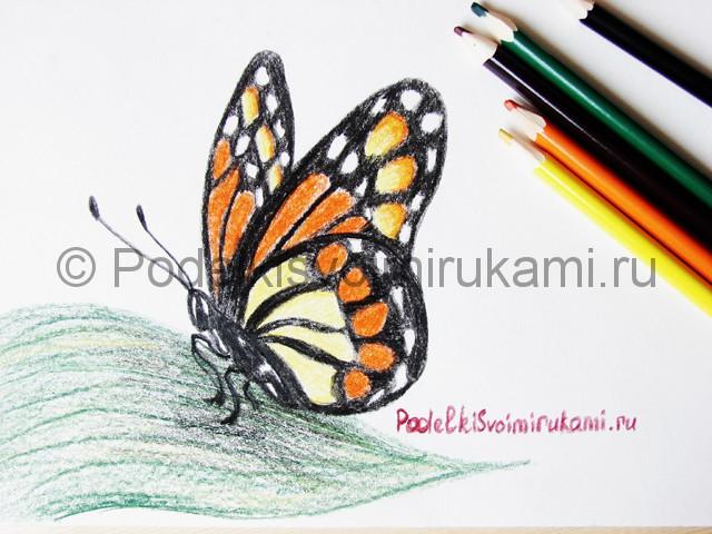 Рисуем бабочку цветными карандашами - фото 25.