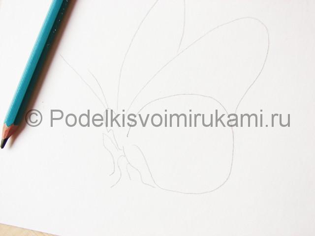 Рисуем бабочку цветными карандашами - фото 3.