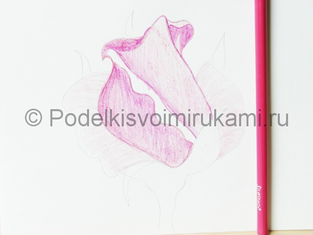 Рисуем красивую розу цветными карандашами - фото 10.