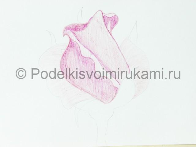 Рисуем красивую розу цветными карандашами - фото 11.