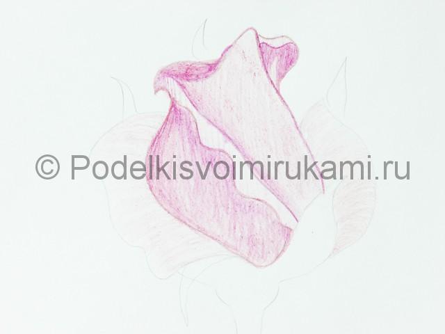 Рисуем красивую розу цветными карандашами - фото 12.