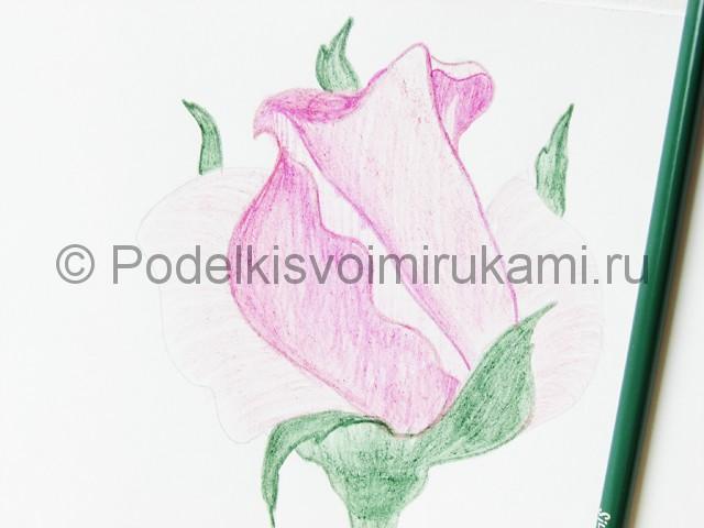 Рисуем красивую розу цветными карандашами - фото 14.