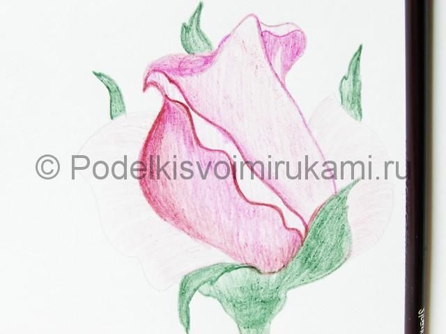 Рисуем красивую розу цветными карандашами - фото 15.