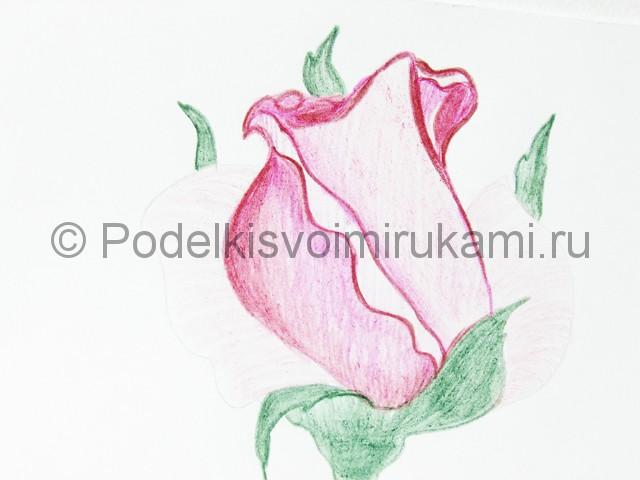 Рисуем красивую розу цветными карандашами - фото 16.