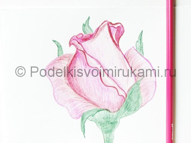 Рисуем красивую розу цветными карандашами - фото 18.