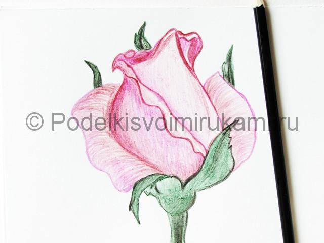 Рисуем красивую розу цветными карандашами - фото 19.