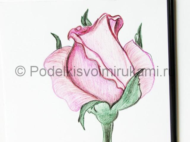 Рисуем красивую розу цветными карандашами - фото 20.