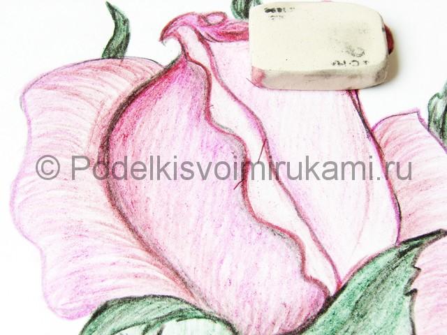 Рисуем красивую розу цветными карандашами - фото 21.