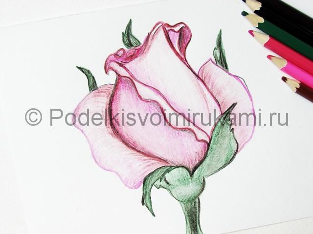 Рисуем красивую розу цветными карандашами - фото 22.