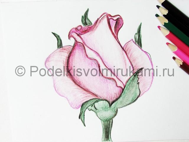 Рисуем красивую розу цветными карандашами - фото 23.