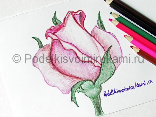 Рисуем красивую розу цветными карандашами - фото 24.