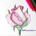 Рисунок розовой розы карандашами.