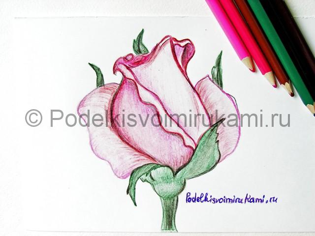 Рисуем красивую розу цветными карандашами - фото 25.