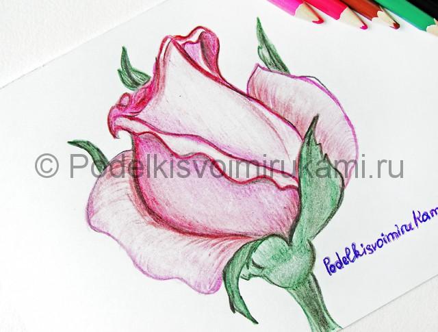 Рисуем красивую розу цветными карандашами - фото 26.