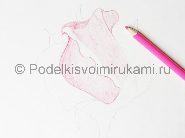 Рисуем красивую розу цветными карандашами - фото 8.