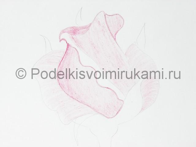Рисуем красивую розу цветными карандашами - фото 9.
